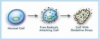 what kills free radicals in the body
